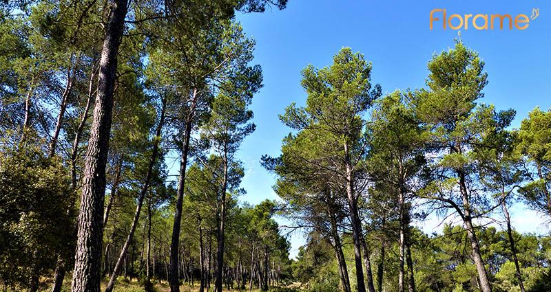 Partenariat Florame X Parc régional naturel des Alpilles